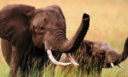 Post Convidado: Paternidade É A Chegada De Um Elefante